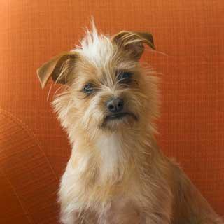 Tilly! photo