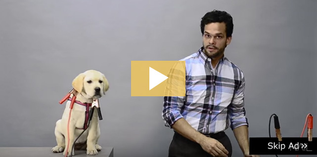 Puppy Ad Example